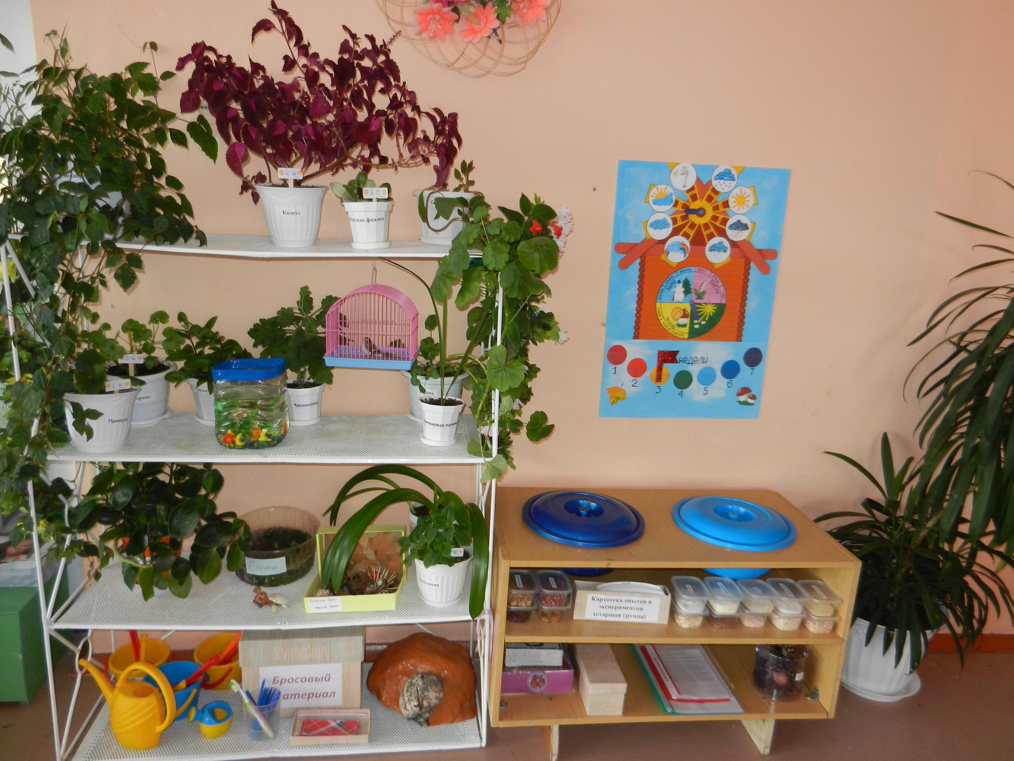 Как оформить уголок природы в детском саду своими руками