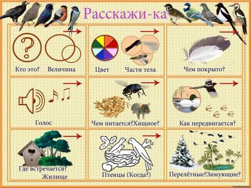билан расскажите птицы текст песни: